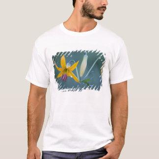 USA WA, Mount Rainier nationalpark. Columbia T-shirts