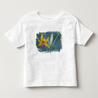 USA WA, Mount Rainier nationalpark. Columbia Tee Shirt