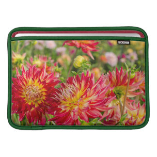 USA Washington. Dahliaen blommar i trädgård MacBook Sleeve