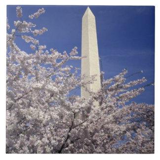 USA Washington DC. Körsbärsröd blommarfestival och Kakelplatta