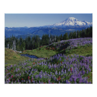 USA Washington Mt. Adams vildmark, ängar Poster
