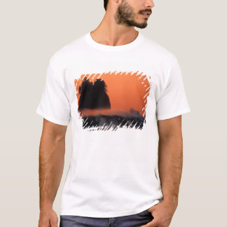 USA Washington, olympisk nationalpark, hav Tee Shirt