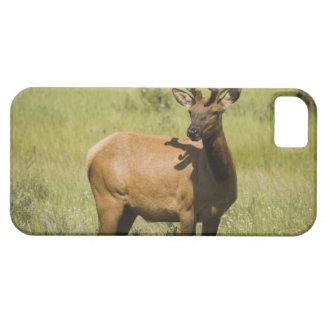 USA Wyoming, Yellowstone nationalpark, älg iPhone 5 Case-Mate Fodraler
