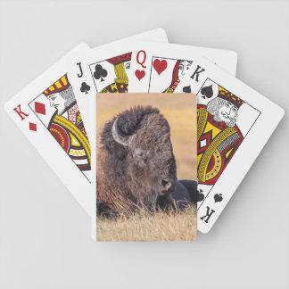 USA Wyoming, Yellowstone nationalpark, Bison Spelkort