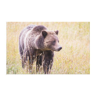 USA Wyoming, Yellowstone nationalpark, Grizzly 3 Canvastryck