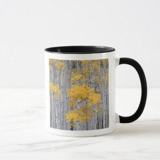 UTAH. USA. Asp- dunge (Populustremuloides) in Mugg