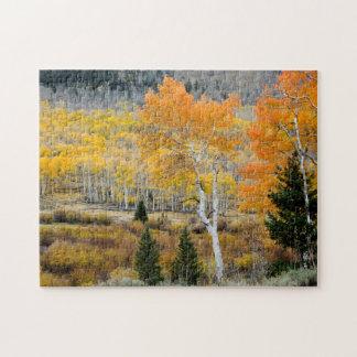 Utah USA. Asp- träd och pilThickets Pussel