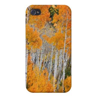 Utah USA. Asp- träd (populusen Tremuloides) 4 iPhone 4 Hud