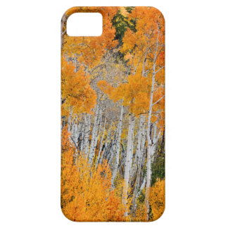 Utah USA. Asp- träd (populusen Tremuloides) 4 iPhone 5 Cases