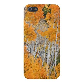 Utah USA. Asp- träd (populusen Tremuloides) 4 iPhone 5 Hud