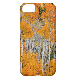 Utah USA. Asp- träd (populusen Tremuloides) 4 iPhone 5C Fodral