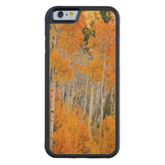 Utah USA. Asp- träd (populusen Tremuloides) 4 iPhone 6 Bumper Fodral I Lönn