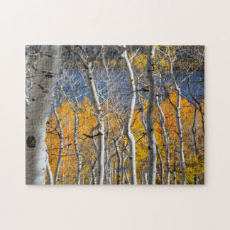 Utah USA. Asp- träd (populusen Tremuloides) Pussel