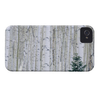 UTAH. USA. Aspen (Populustremuloides) & Douglas iPhone 4 Case-Mate Fodraler