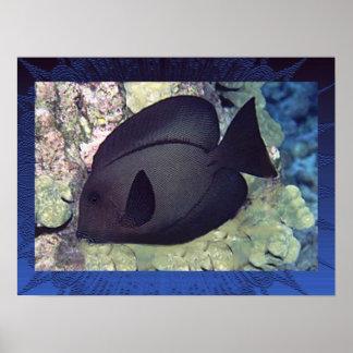Utenochaetus Hawaiiensis affisch