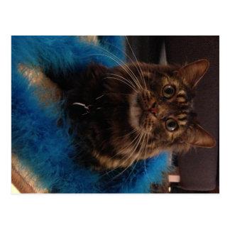 Utsmyckad katt vykort