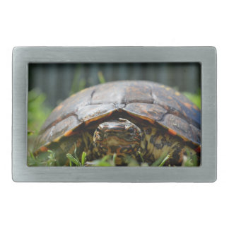 Utsmyckad wood sköldpadda på hans jämnt i gräs