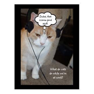 Vad gör katter stunder som vi är på arbete? vykort