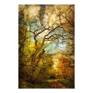väg i skogen fototryck