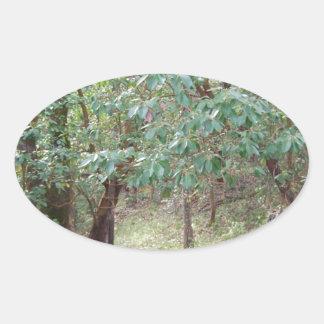 Väg till och med skogen ovalt klistermärke
