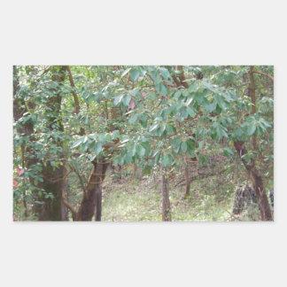 Väg till och med skogen rektangulärt klistermärke