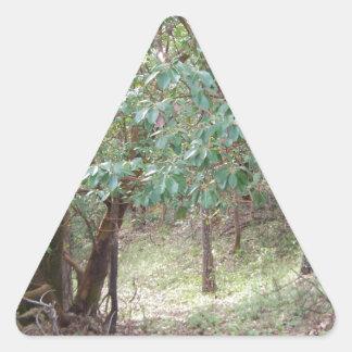 Väg till och med skogen triangelformat klistermärke