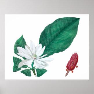 Vågrät för tryck för blomma för Magnoliavit stor