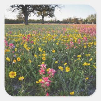 Vägrenvildblommar i Texas, vår 3 Fyrkantigt Klistermärke