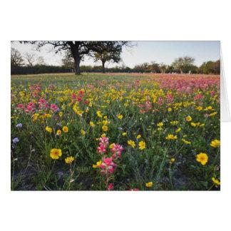 Vägrenvildblommar i Texas, vår 3 Hälsningskort