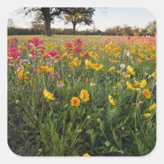 Vägrenvildblommar i Texas, vår Fyrkantigt Klistermärke