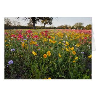 Vägrenvildblommar i Texas, vår Hälsningskort