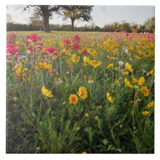 Vägrenvildblommar i Texas, vår Stor Kakelplatta