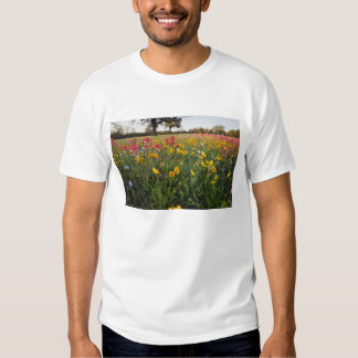 Vägrenvildblommar i Texas, vår T-shirts