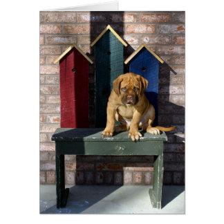 Vakthund Hälsningskort