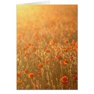 Vallmofält i solskenet hälsningskort