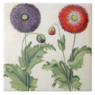 Vallmor: multipliciincarnato för flore 1.Papaver;  Kakelplatta