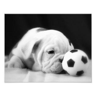 Valp för bulldogg för fotbollbollnäsa engelsk fototryck