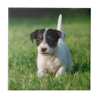 Valp för jackRussell Terrier Kakelplatta
