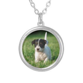 Valp för jackRussell Terrier Silverpläterat Halsband