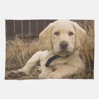 Valp för Labrador Retriever Kökshandduk