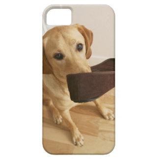 Valp för Labrador retriever med häftklammermataren iPhone 5 Fodral