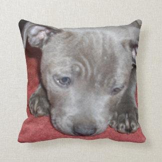 Valp för Terrier för blåttStaffordshire tjur, Kudde