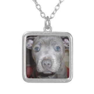 Valp för Terrier för blåttStaffordshire tjur, Silverpläterat Halsband