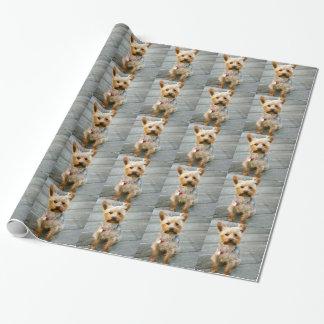 Valp för Yorkshire Terrier - jjhelenedesign Presentpapper