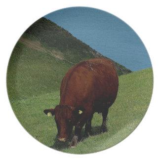 Vandring för ko för södra Devon Ruby röd på kusten Tallrik