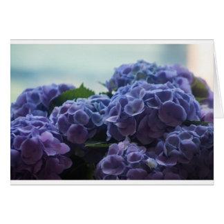 Vanlig hortensia hälsningskort