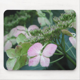 vanlig hortensia musmatta