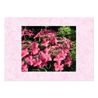 Vanlig hortensia. Nätt rosa Flowers. Set Av Breda Visitkort