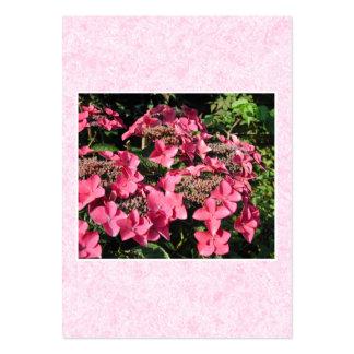 Vanlig hortensia. Nätt rosa Flowers. Visitkort