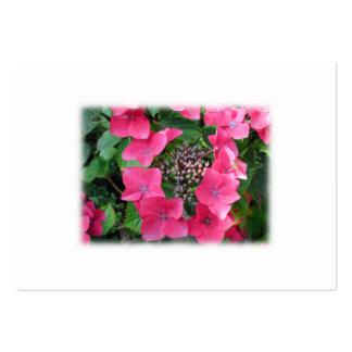Vanlig hortensia. Rosa blommor. Vitt Set Av Breda Visitkort
